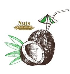 Coconut Nut Cocktail with Leaf Hand Draw Sketch vector image vector image