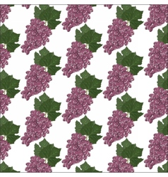 Grapes clusters pattern vector