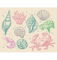 Set sea shell coral crab and shrimp vector