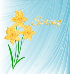 Spring blue background with daffodils vector