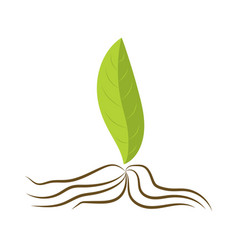 Leaf with roots organic food vector