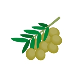 Olives on branch with leaves icon isometric 3d vector image