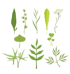 Trees and plants leaves set vector