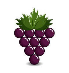 grape cluster icon image vector image