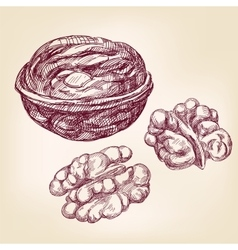 Walnuts hand drawn llustration realistic vector