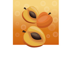 brochure apricot fruit blank vector image