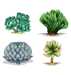 Different cacti vector