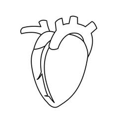 Heart organ icon vector