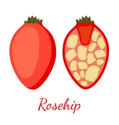 Rosehip seeds plant cartoon flat style vector