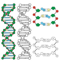 Dna - helix molecule model vector