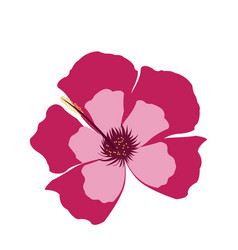 pink flower decoration floral ornament vector image