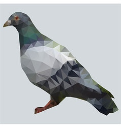 Pigeon polygon vector