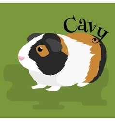 Happy pets home animals guinea pig on the white vector