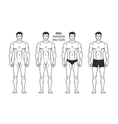 Ideal proportion male figure hand-drawn outline vector