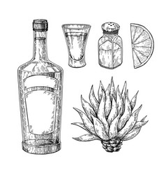 Tequila bottle blue agave salt shaker and shot vector