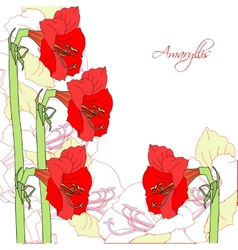 White background with red ammaryllis vector image vector image