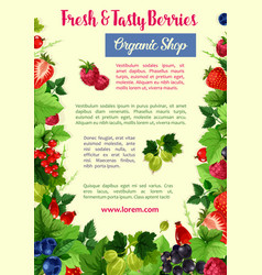 berries and fruits poster for farm shop vector image