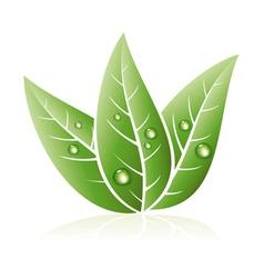 Green grass leaves vector