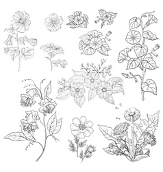 Flowers set outline vector image