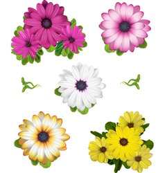 African daisy collection vector