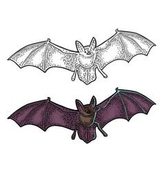 bat flying with scary face black vintage vector image vector image