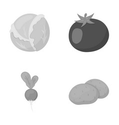 Cabbage white tomato red rice potatoes vector