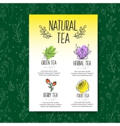 Herbal tea menu brochure Organic herbs and wild vector image vector image
