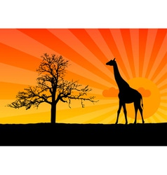 Giraffe sunrise vector