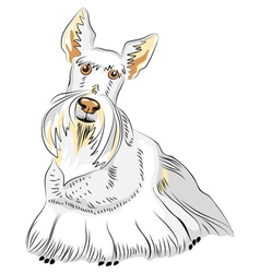 Dog breed scottish terrier vector