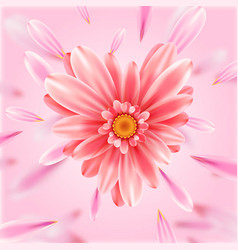 gerbera flower heart card vector image