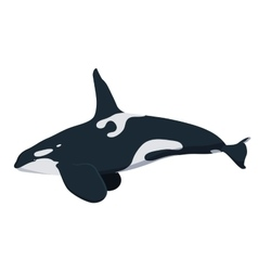 Killwhale orca whale icon isolated on white vector