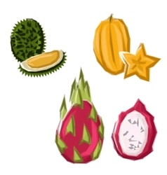 Polygonal geometric asian tropical fruits vector