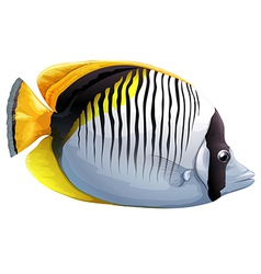 Spot-nape butterflyfish vector image vector image