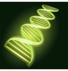 The dna molecule on a dark background biological vector