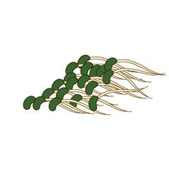 Bean sprouts vector