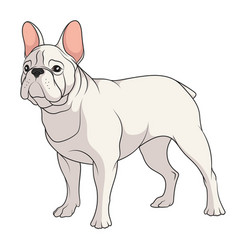 color of a french bulldog vector image