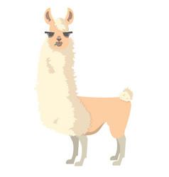 lama alpaca vector image vector image