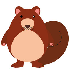 Squirrel with brown fur vector