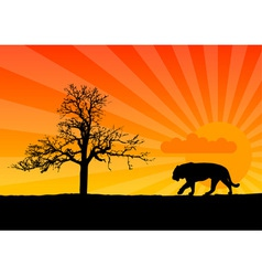 tiger in african vector image