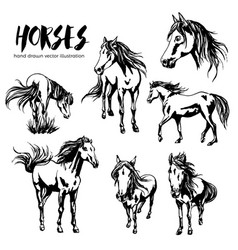 Collection of seven beautiful hand-painted horses vector