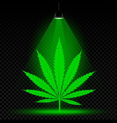 Hemp leaf lamp light vector
