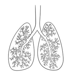 Lungs doodle drawing of vector