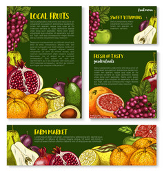 Sketch fruit store banners of farm fruits vector
