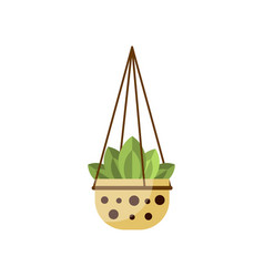 Green leafy house plant indoor flower in pot vector