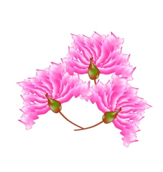 Pink crape myrtle flowers on white background vector