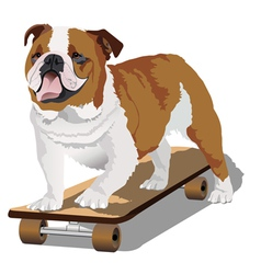 Bulldog on skateboard vector image vector image