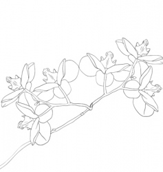 illustration of orchid flower vector