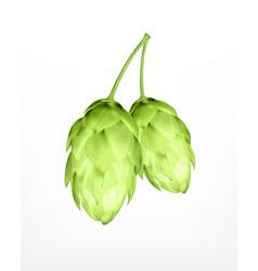 Hop plant icon vector