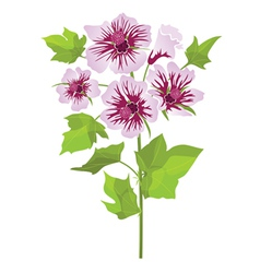 Pink flowers mallow with green leaves vector