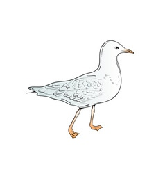 Sea gull vector